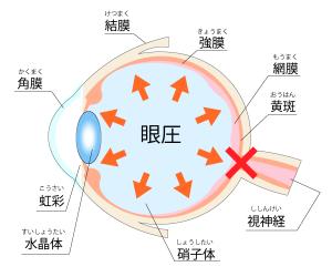 高い 眼 圧 眼圧と血圧